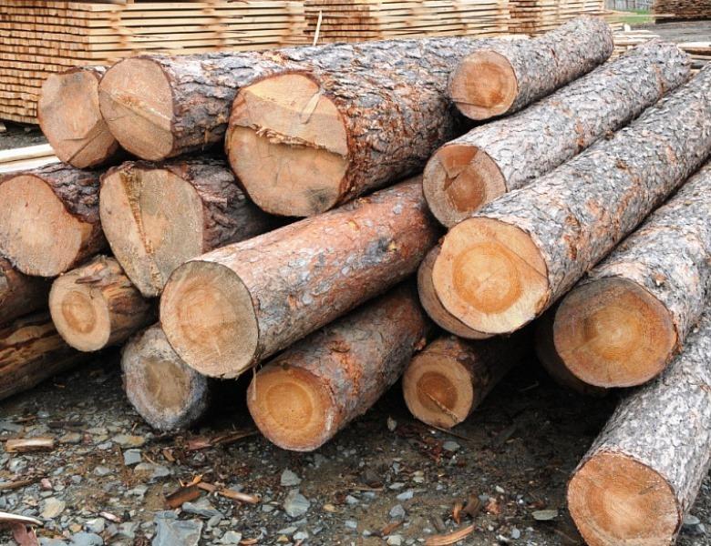 В Башкирии лесные декларации теперь можно подать в электронном виде